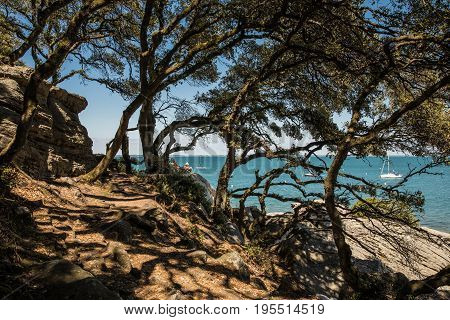 The shady Wood of la Chaise in the Noirmoutier coast (France)