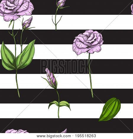 Seamless pattern with gently pink rose flower isolated on black and white striped background. Vector