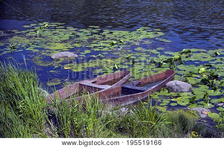 On the banks of the river two boats sank among the leaves of the water-lily and stones on a warm sunny afternoon.