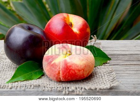 Fresh ripe organic peach,plum and chinese flat peach on old wooden table.Diet,healthy food,raw food concept.