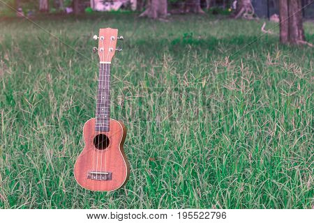 The levitation ukulele in the air near tree in the meadow