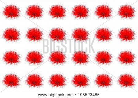 Collection of  red Powder Puff or Calliandra haematocephala Hassk isolated on white  background