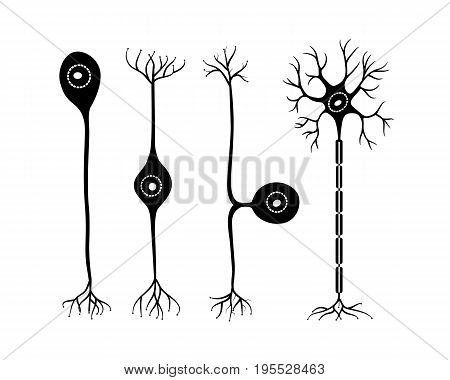 vector four types of neurons on a white background