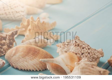 Seashells on blue wood with copy space, sea vacation background with copy space on wooden planks