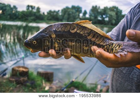The fisherman is holding a catch - a large carp