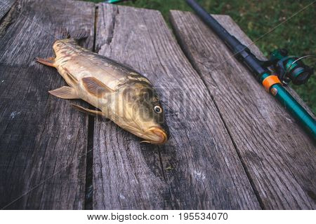 Fresh river fish carp on a wooden background