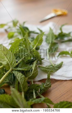 Mint sprigs on a wooden table. Mint sprigs on a wooden table. Aromatic mint on a wooden background.