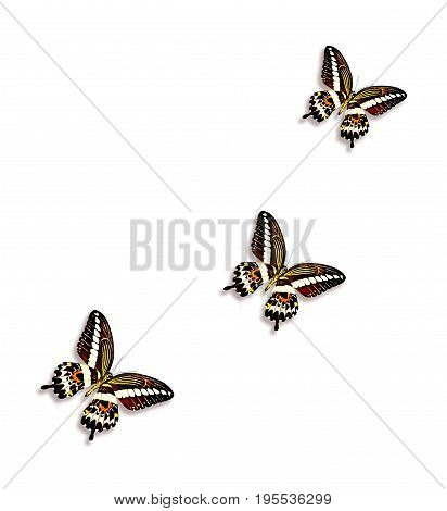 Insects butterflies isolated on a white background.
