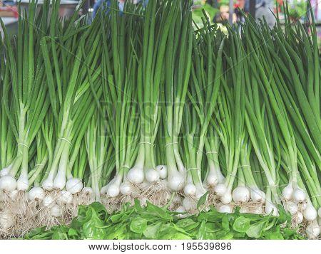 Fresh green healthy bio leek on farmer agricultural market on sunny day