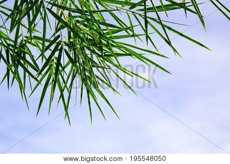 Green palm leaves on a blue sky background.