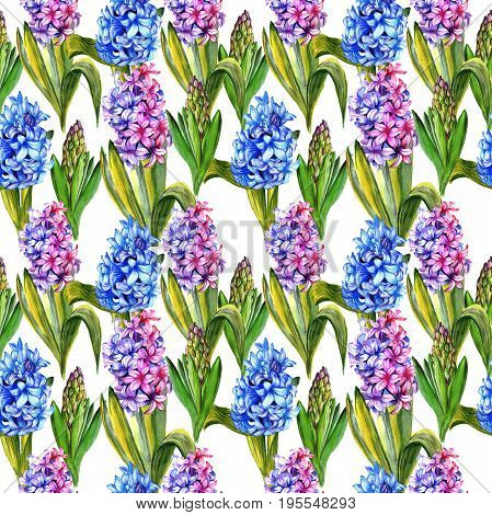 Wildflower hyacinth flower pattern in a watercolor style. Full name of the plant: hyacinth. Aquarelle wild flower for background, texture, wrapper pattern, frame or border.