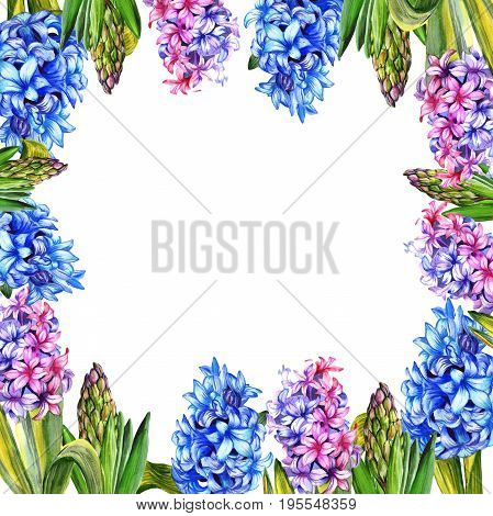 Wildflower hyacinth flower frame in a watercolor style. Full name of the plant: hyacinth. Aquarelle wild flower for background, texture, wrapper pattern, frame or border.