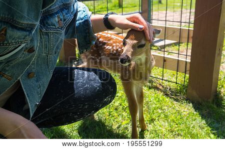 Young Deer On A Farm In Milwaukee