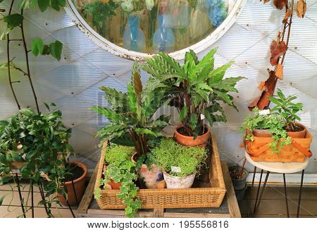 Veranda's Relaxing Green Space with Tropical Plants