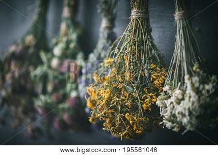 Hanging Bunches Of Medicinal Herbs And Flowers, Focus On Hypericum Flower St. Johns Wort. Herbal Med