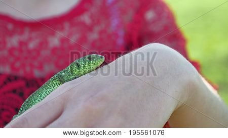 The girl is holding lizard. Girl in nature holds a green lifestyle lizard