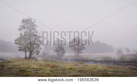 Autumn landscape of misty foggy cold morning in nature overcast gray weather. Sad trees on banks of cold river. Sentimental and melancholic autumn landscape.