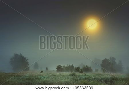 Autumn night landscape of cold foggy nature with large bright yellow moon in sky. Moonlight falls on trees and grass in fog. melancholic landscape of night meadow in autumn