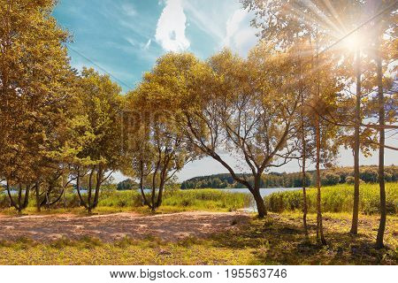 Bright colorful autumn. Landscape of colorful golden autumn on bright sunny day on lake. Bright sunlight shines through trees with yellow foliage. White clouds in blue sky. Beautiful golden Autumn