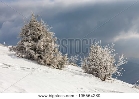 Majestic Evening Winter Landscape In The Mountains