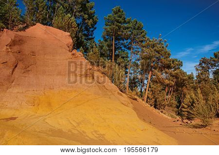 View of ocher land, trees under a sunny blue sky, in the park