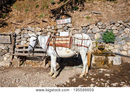 horse used to transport tired tourists in Samaria Gorge in central Crete Greece