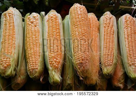 Ripe Corn Is Sold At The Bazaar