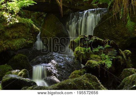 Trilluim Falls in Prairie Creak State Park in the Redwoods.