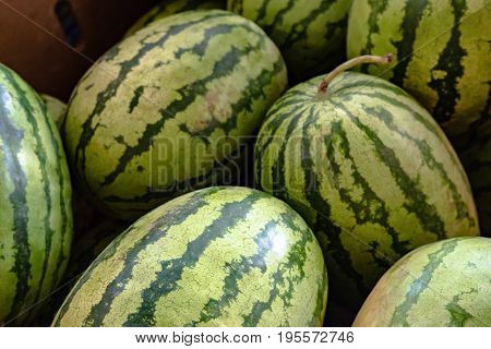 Background image of watermelons at a farmers market