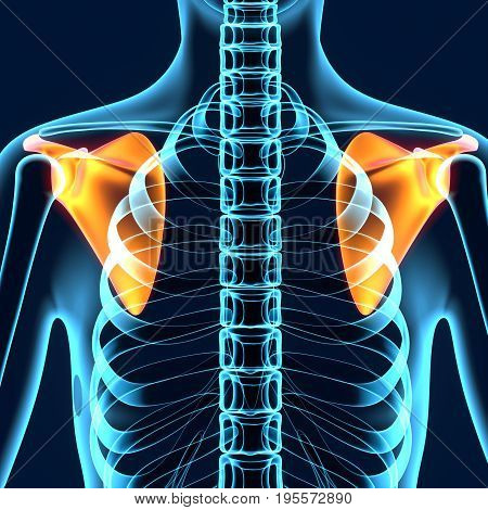 3D Illustration of Human Body Bone Joint Pains Anatomy (Scapula)