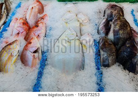Frozen Fish On The Counter At The Supermarket