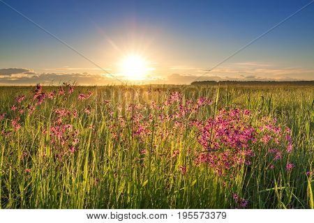 summer rural landscape with a meadow and blossoming flowers. scenery with sunrise morning of new day. sun shine sunbeams on a meadow