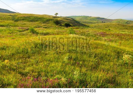Hills are covered with a green grass and wild flowers of different color. A number of hills extends to the horizon on one there is a lonely tree.