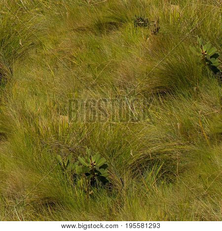 Seamless Texture Of Grass Lands