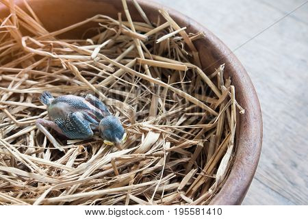 Baby bird died on bird nest, Died animal