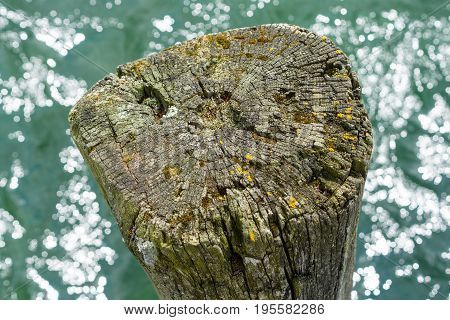 The old stump sticks out of the water. Background.