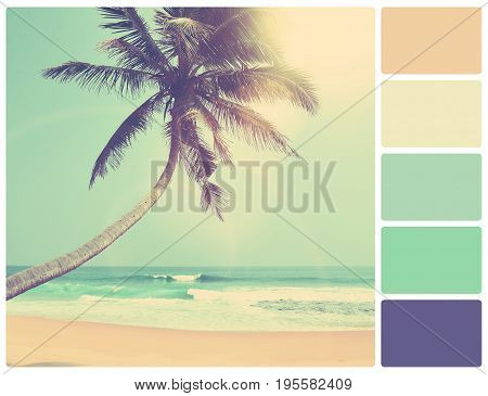 Palm On A Beach With Palette Color Swatches