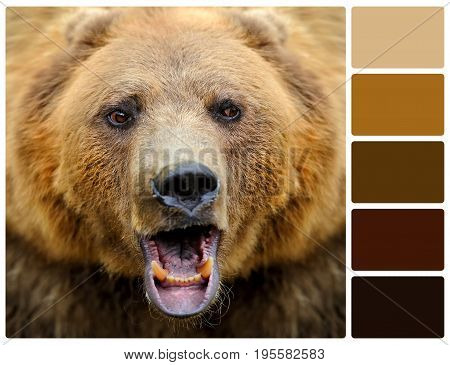 Bear Portrait With Palette Color Swatches