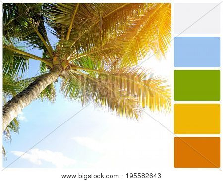Palm Tree With Palette Color Swatches