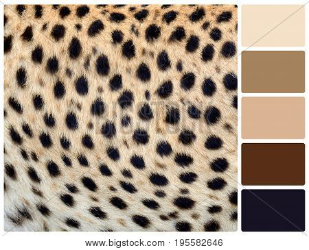 Cheetah Skin Texture With Palette Color Swatches
