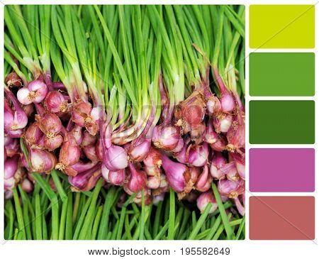Garlic Texture With Palette Color Swatches