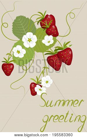 Greeting card, blossoming strawberries, flowers and berries with leaves, inscription summer greeting, on beige background, vector illustration
