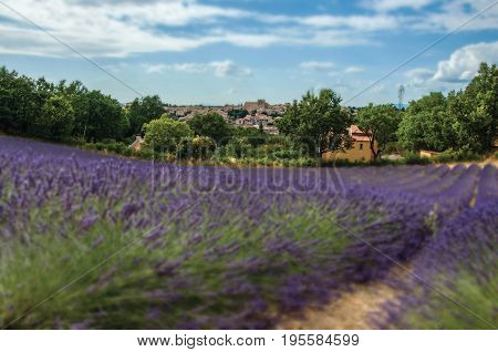 Panoramic view of lavender fields under sunny blue sky and the town of Valensole in the background. In the Alpes-de-Haute-Provence department, Provence region, in southeastern France. Retouched photo
