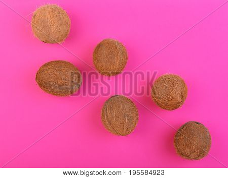 A lot of fresh, organic, ripe and whole coconuts on a bright pink background. Fresh nutritious coconuts. Exotic cocos on a pink background. Whole hard nuts. Summer fruits.