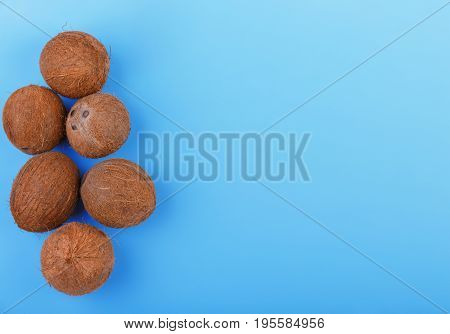 Top view of exotic and sweet coconuts on a bright blue background, on the left side. Fresh and whole cocos. Natural tropical fruit coconuts. A lot of tropical coconuts on a saturated blue background.