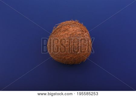 Exotic and tropical coconut, on a dark blue background. Close-up of fresh, whole and brown coconut. Fresh nutritious coco. Hawaiian coconuts. Healthful vegetarian diet.