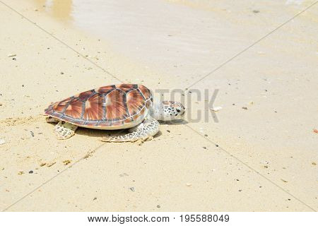 turtle release Into sea  the beach Andaman