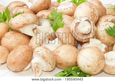 Background of the fresh whole uncooked button mushrooms with several parsley twigs