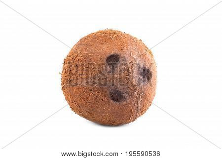 A close-up hard exotic brown nut isolated on a shiny white background. A coco with three holes in it. Nutritious summer fruits full of vitamins. Tasty ingredients for gourmets.