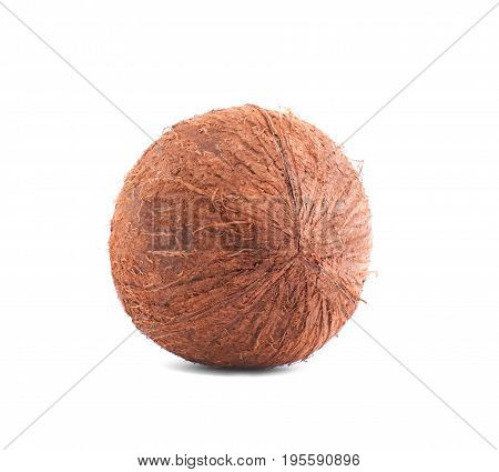 A perfect fresh coconut isolated over the shiny white background. A bright brown coco with hairy texture. Beautiful round nuts full of nutrients. Ingredients for various diets.